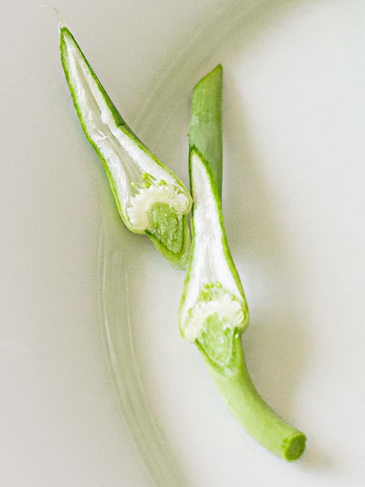 garlic scape bulb cut in half