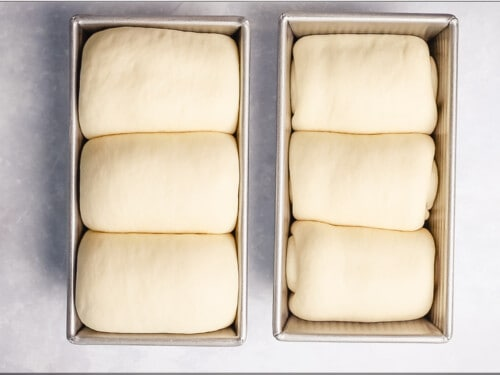 Milk bread dough proofing in loaf pans ready to bake.